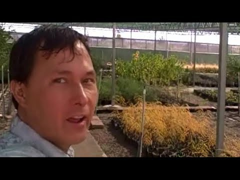 Edible Landscaping Plants for Desert Gardening