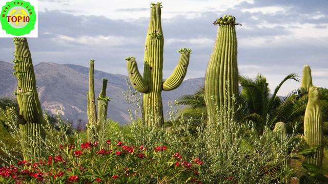 Spectacular Desert Plant Life – Amazing Nature