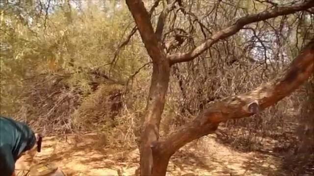 Desert Botanical Gardens Scottsdale Arizona