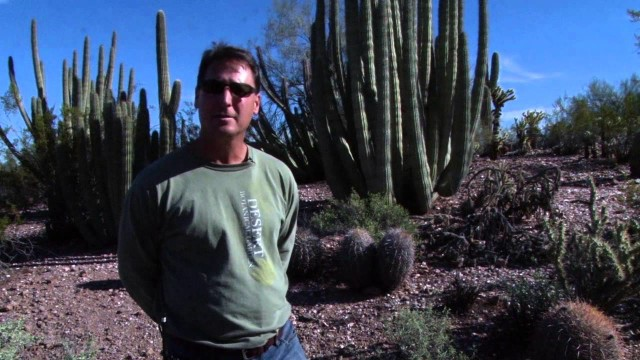 Low Desert Gardening Tip: Weeds Part1