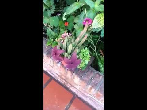 """Gringa muestra la flor de su cactus """"un canto a la vida"""""""