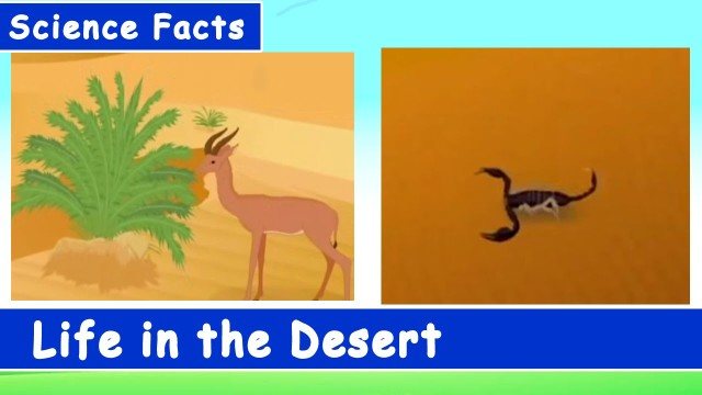 Science Facts for Kids – Life in the Desert – Fun and Learn Series