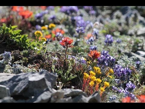 Xeriscaping: Less Grass, More Color