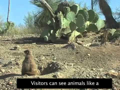 Desert Museum in Arizona Exhibits Native Plants and Animals