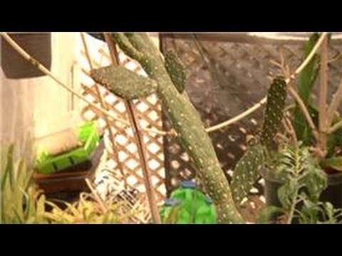 Home Landscaping Tips : How to Transplant Cactus Pieces