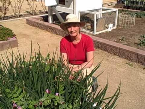 Growing Food in the Desert – Winter Vegetable Garden in Las Vegas