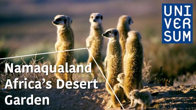 Namaqualand – Africa's Desert Garden – The Secrets of Nature