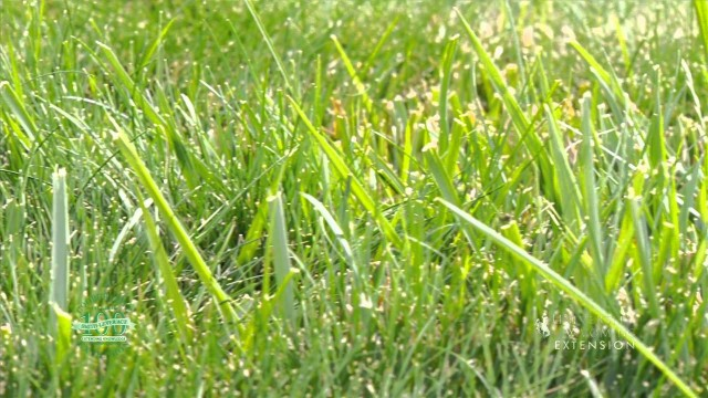 Drought Tolerant Lawns | From the Ground Up