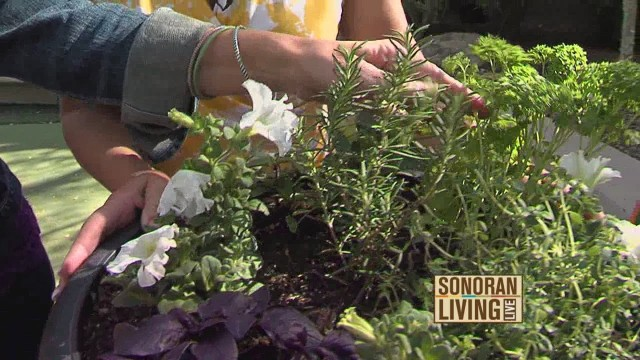 Creative container gardening tips from AZ Plant Lady