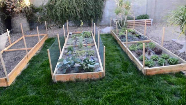 Raised Garden Beds – Vegetable Garden in Phoenix, Arizona