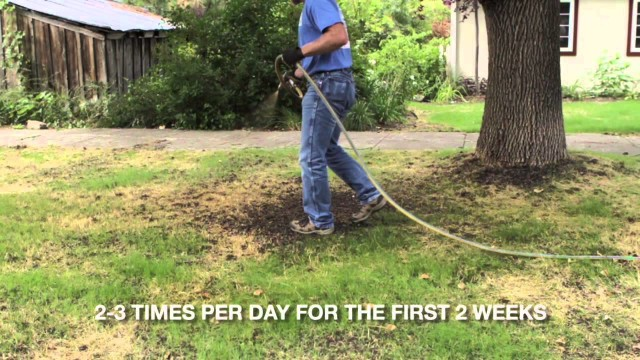 """How to"" convert to a Drought Tolerant Lawn"