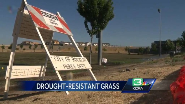 Drought- resistant grass put in several Rocklin parks