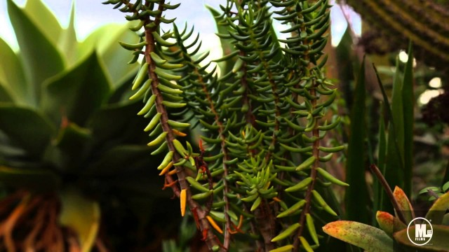 Movie Short: Desert Plant Life (Canon 6D Video)