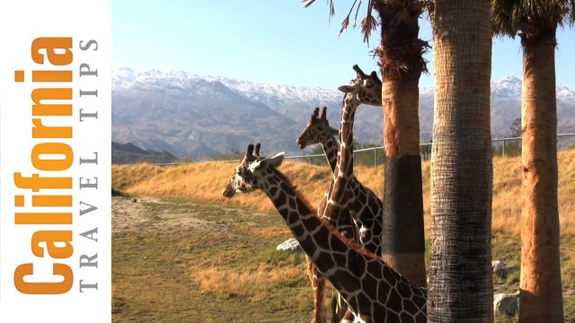 The Living Desert – Palm Springs Attractions
