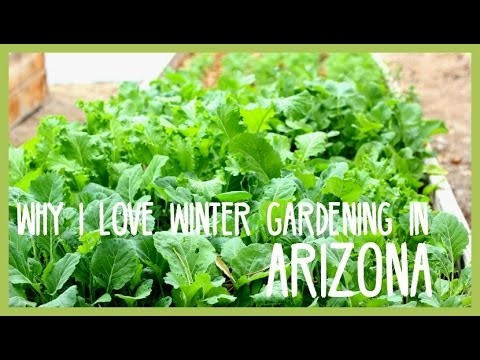 Why I love winter gardening in Arizona!