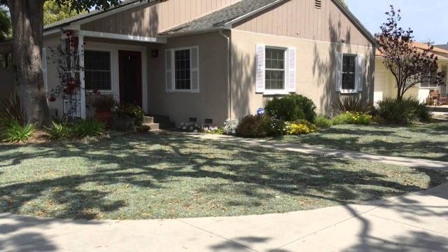 What is the Best Drought Tolerant Plant To Replace Grass – Dymondia