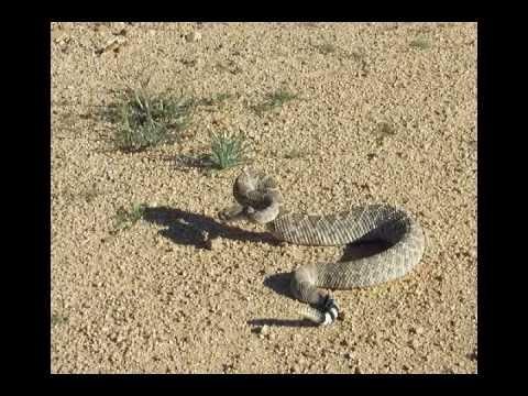 Snakes in the Desert