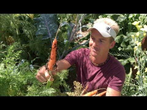 Backyard Carrot Harvest in Phoenix, Arizona – Epic Garden!