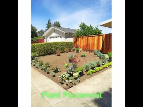 Yard Remodel to drought tolerant design. Xeriscape succulents