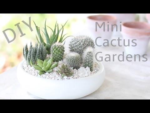 DIY Mini Cactus Gardens