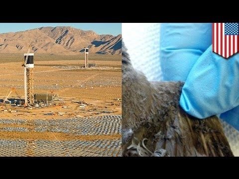 World's largest solar plant burning birds in Mojave Desert