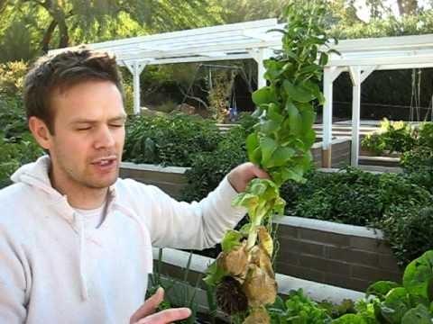 I'm back. New Blog. And gardening whatever in ARIZONA