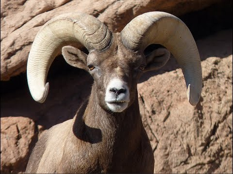 Visiting Animals in Arizona-Sonora Desert Museum | West of Tucson | Arizona | United States