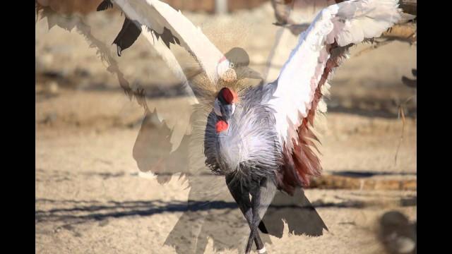Bird at The Living Desert, Palm Desert, CA.