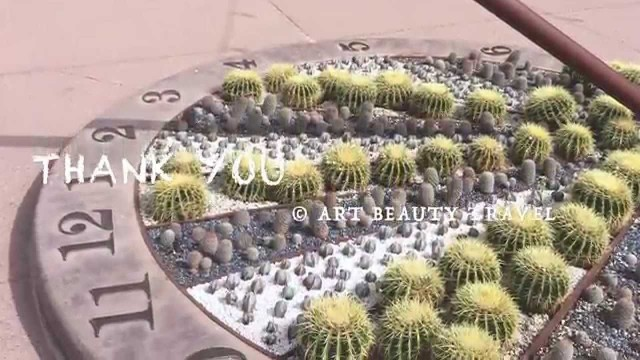 CactusBook, Desert Botanical Garden, Phoenix, Arizona, 2015. CACTI, КАКТУСЫ