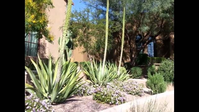 Desert landscaping   desert landscaping for beginners