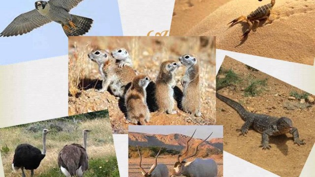 Animals and Plants of the Sahara Desert