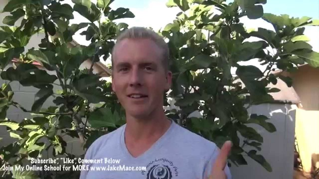 My Garden Tour – Phoenix, Arizona 2015 – Edible & Tropical TREES