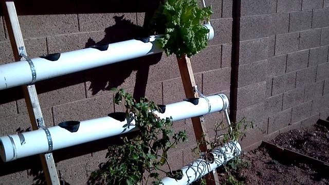 Arizona Backyard Gardening and Hydroponics
