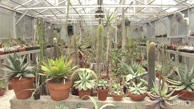 Cactus and succulent garden and greenhouses | Bob Barth | Central Texas Gardener