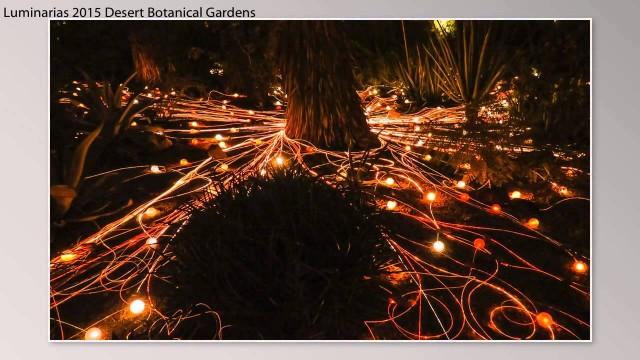 1512-Luminarias-Desert Botanical Gardens