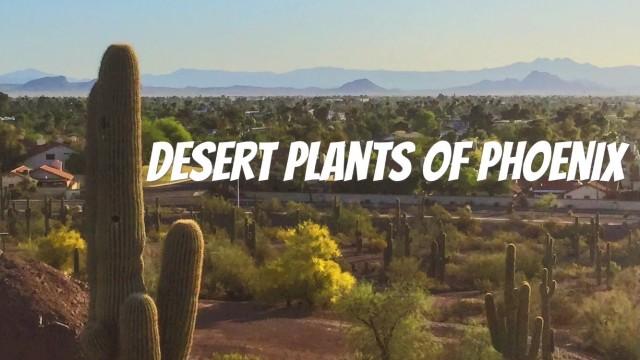 Desert Plants of Pheonix