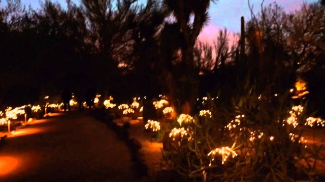 Desert Botanical Gardens & Sonoran Light