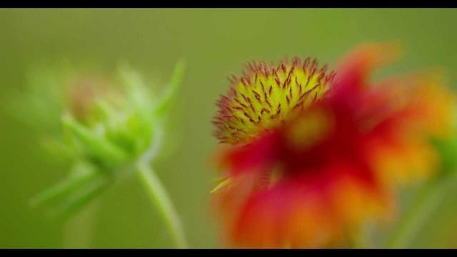 Desert Botanical Gardens in 4K Ultra HD