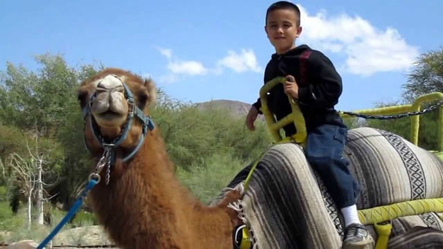 The Living Desert – Camel Ride. Palm Desert, California.