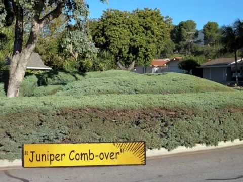 "Landscaping Mistakes: Misplaced Plants on ""Crimes Against Horticulture"""