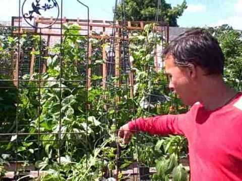 Square Foot Gardening – Making the SFG Grid and Planting Vegetables