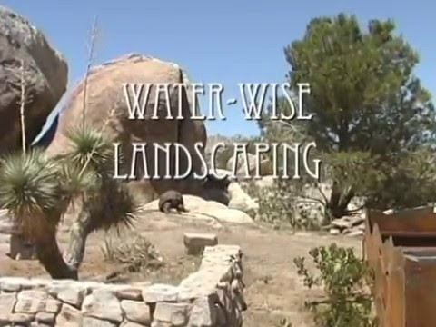 Creating a drought-tolerant Southwest landscape in your yard