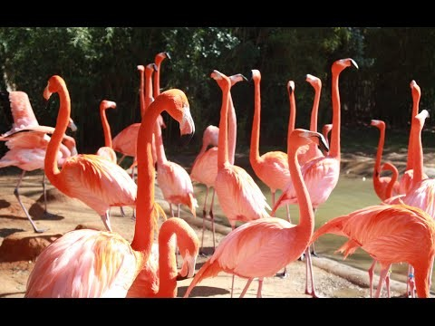 Visiting Animals in Fort Worth Zoo, Zoo in Fort Worth, Texas, United States