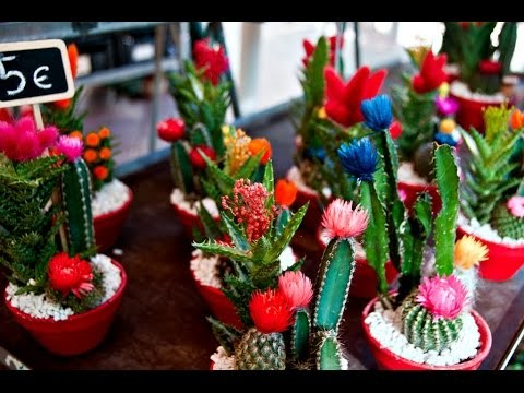Create an Indoor Desert Garden mini cactus