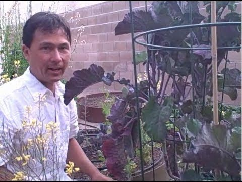 Most Productive Vegetable to Grow in a Winter Southwest Desert Vegetable Garden