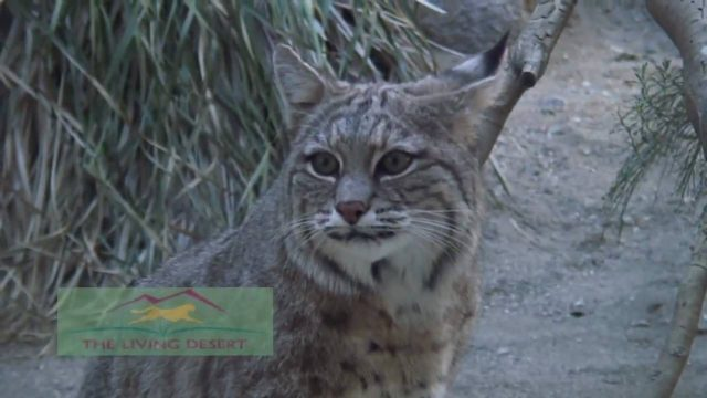 The Living Desert – Palm Desert – Indian Wells, California