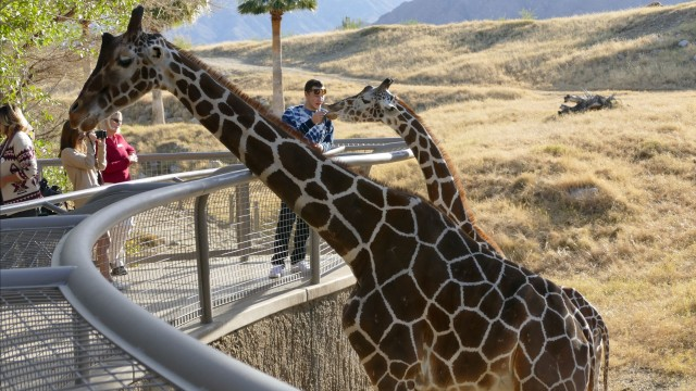4k Animal & Plant Highlights of The Living Desert Zoo & Gardens