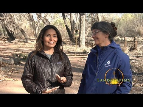 Landscaping Southwest tv: S3 eps 2 – The RIO Program