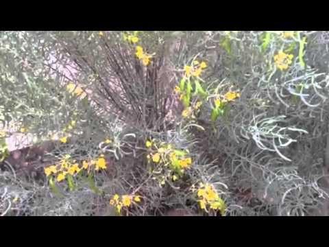 DESERT PLANTS: IDEAMACHINE'S BACKYARD TOUR