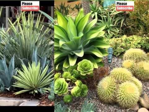 House Plant Agave Landscaping | Picture Set Of Decorating Ideas With House Plants